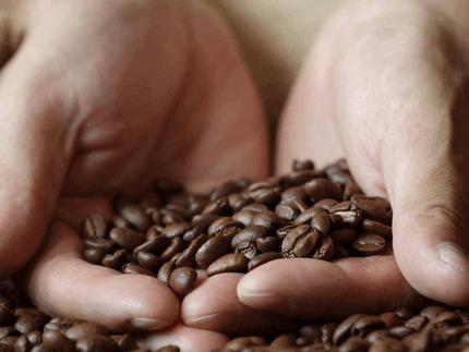 Café Sustentable